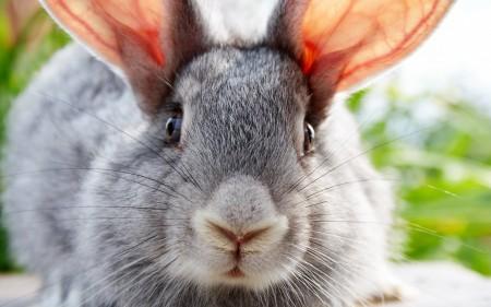 ارنب (10)