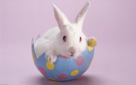 ارنب (1)