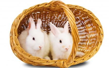 ارنب (4)