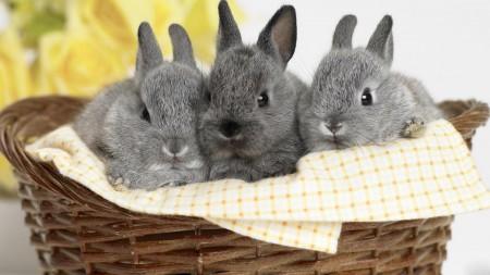 ارنب (5)