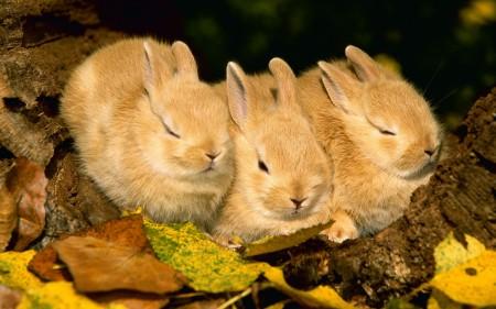 ارنب (8)