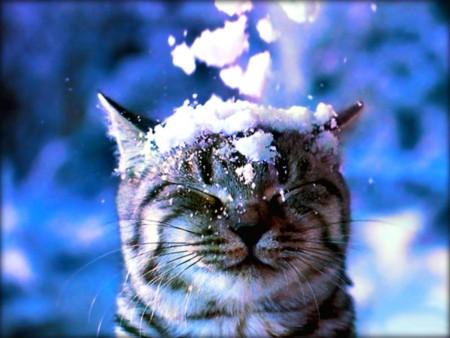اروع قطط (1)