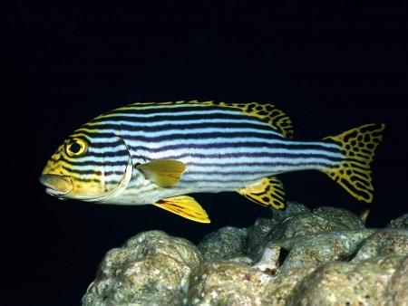 اسماك الزينة (2)