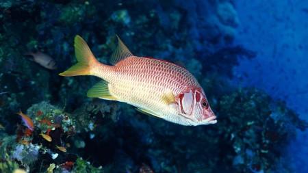 اسماك الزينة (3)