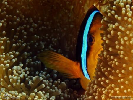 اسماك رائعة (2)