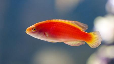 اسماك ملونة (1)