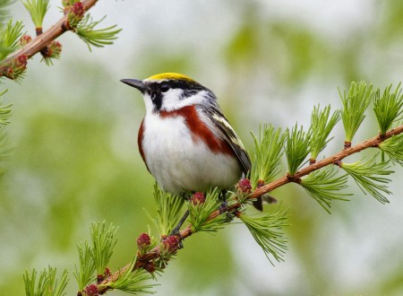 الطيور بالصور (1)