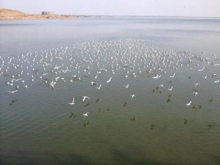 الطيور بالصور (3)