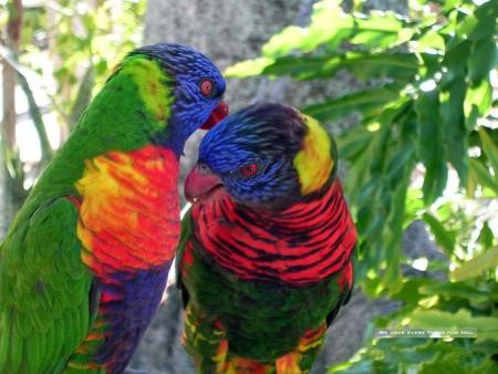 الطيور بالصور (5)