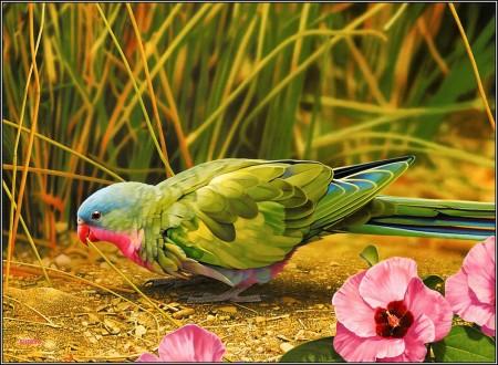 الطيور بالصور (6)