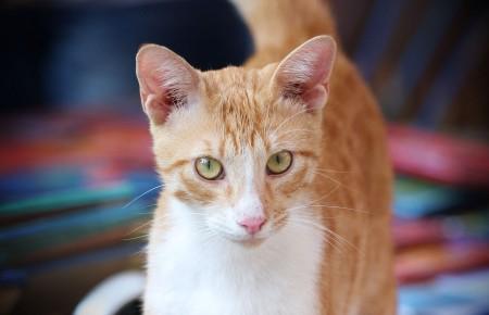 القطط (1)