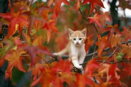 القطط (3)
