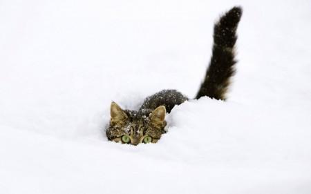 القطط (4)