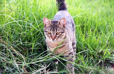 القطط (6)