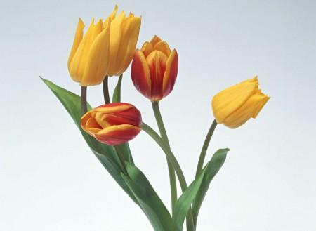 الوان الورد الجميلة (4)