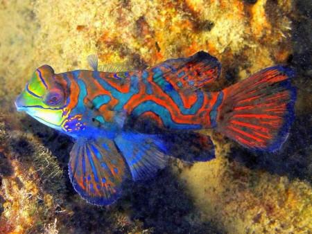 الوان سمك زينة (1)