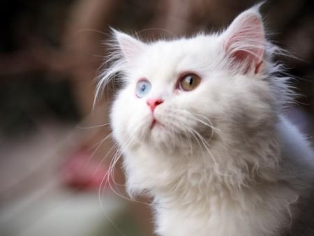 انواع قطط (2)