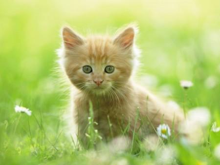 انواع قطط (3)