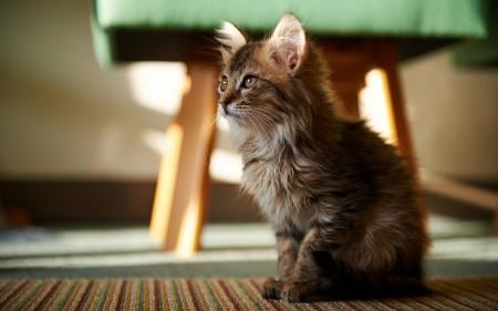 بالصور احلي قطط (1)
