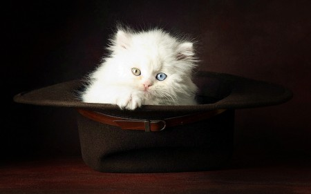 بالصور احلي قطط (6)
