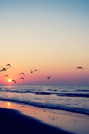 بحر جميل (3)
