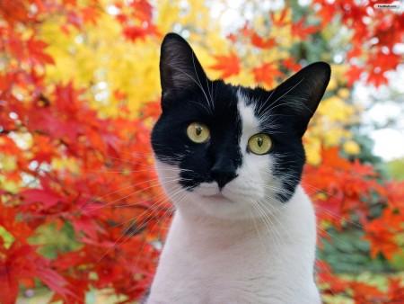 تحميل صور قطط (1)