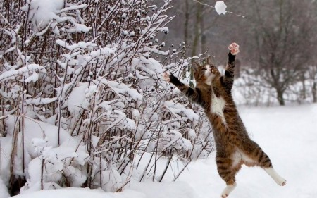 تنزيل صور قطط (3)