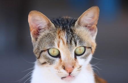 تنزيل صور قطط (4)