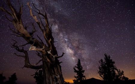 خلفيات النجوم (2)