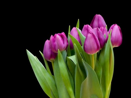 خلفيات زهور وورد (2)