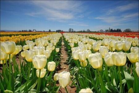 خلفيات زهور وورد (4)