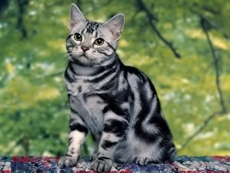 خلفيات صور قطط (6)