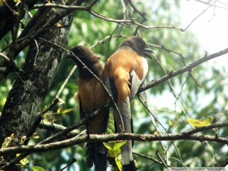 خلفيات طيور (4)