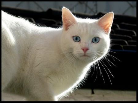 خلفيات قطط (3)