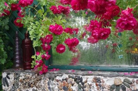 زهور جذابة وجميلة (1)