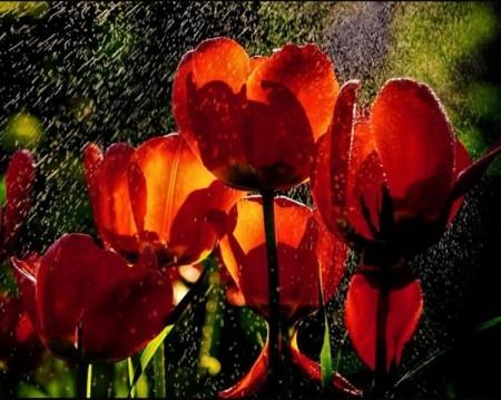 زهور جذابة وجميلة (4)