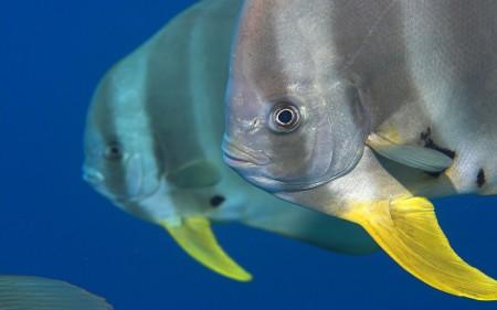 سمك زينة بالصور (1)