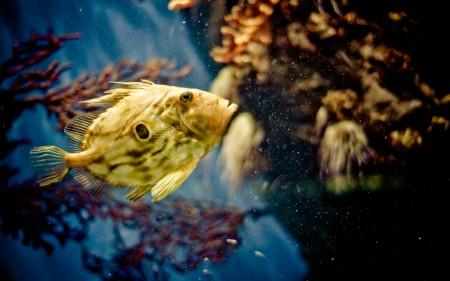 سمك زينة جميل (1)