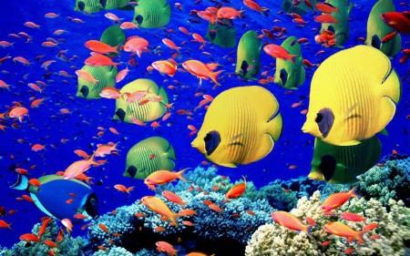 سمك زينة فخم (1)