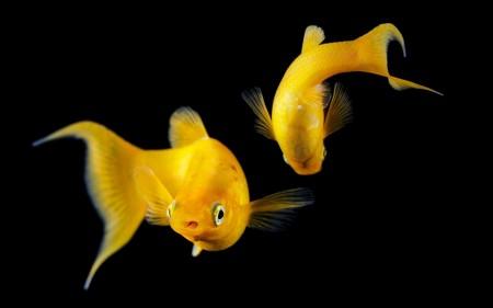 سمك زينة فخم (3)