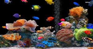 سمك زينة فخم (4)