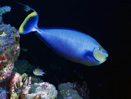 سمك زينة ملون (2)
