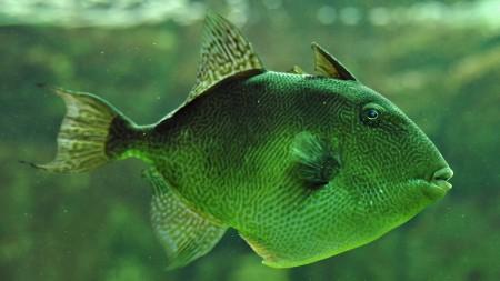 سمك زينة ملون (3)