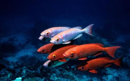 سمك زينة ملون (4)