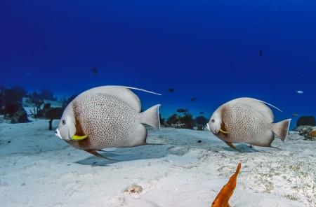 سمك زينة (1)