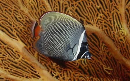 سمك زينة (2)