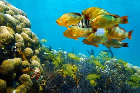 سمك زينة (3)