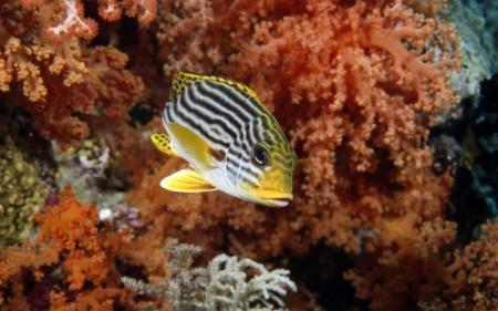 سمك زينة (4)