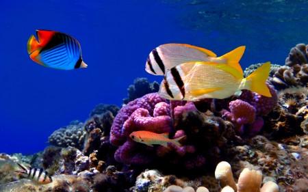سمك ملون (1)