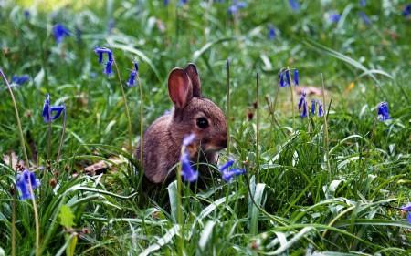 صور أرانب HD (2)